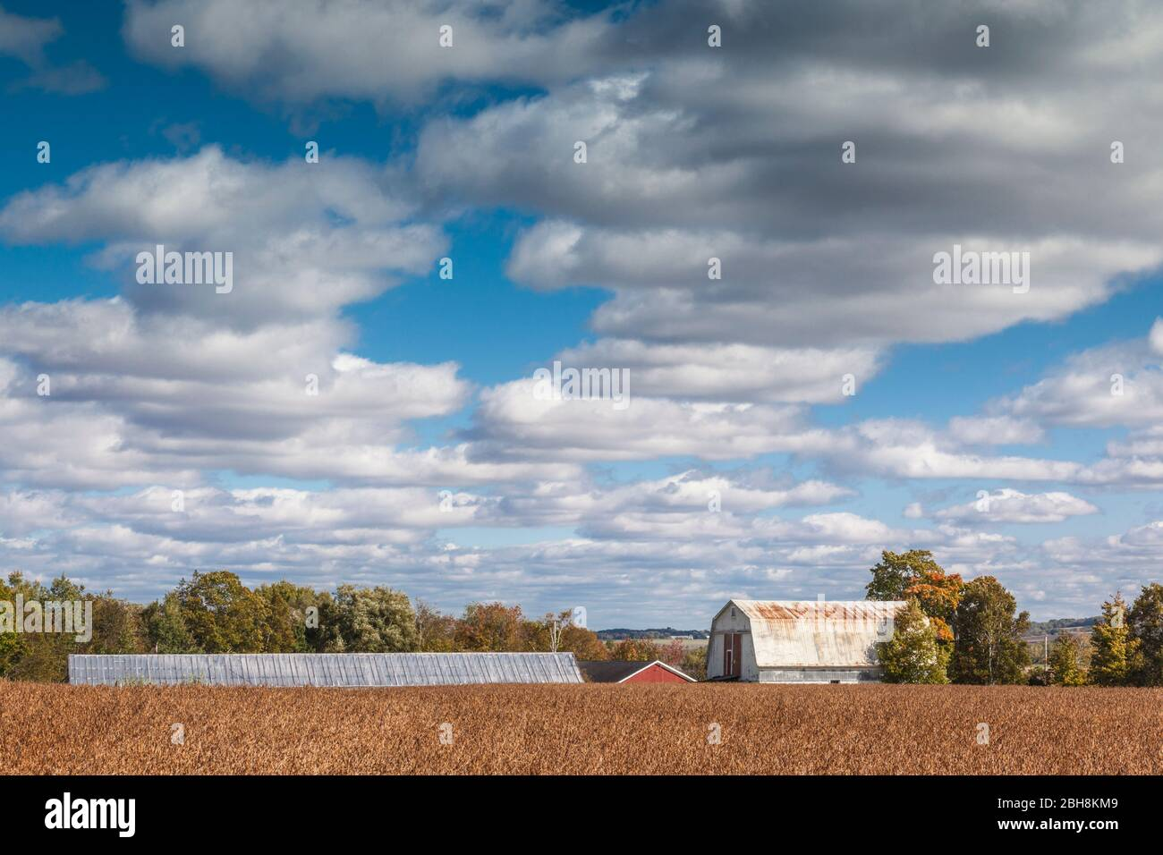 Le Canada, la Nouvelle-Écosse, Annapolis Valley, Wolfville, champs agricoles, automne Banque D'Images