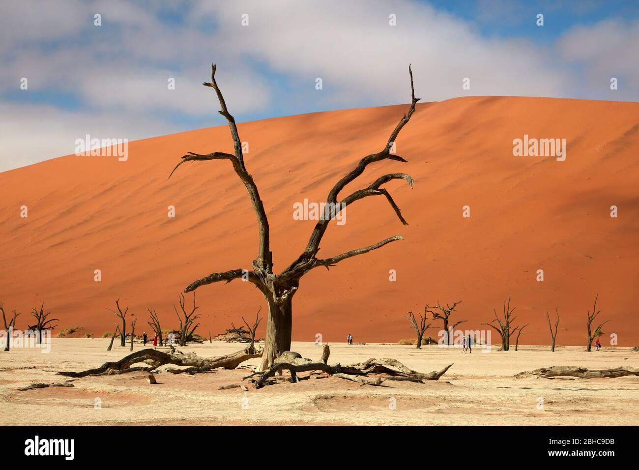 Arbres morts (dont l'âge était de 900 ans) et dunes de sable à Deadvlei, près de Sossusvlei, parc national du Namib-Naukluft, Namibie, Afrique Banque D'Images