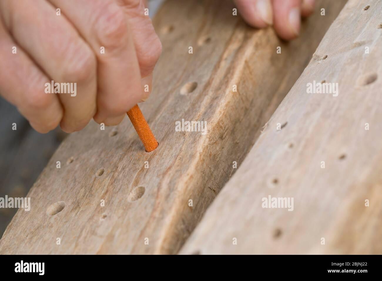 aide à la nidification pour les abeilles sauvages, lissant les trous dans le bois dur avec du papier émeri Banque D'Images