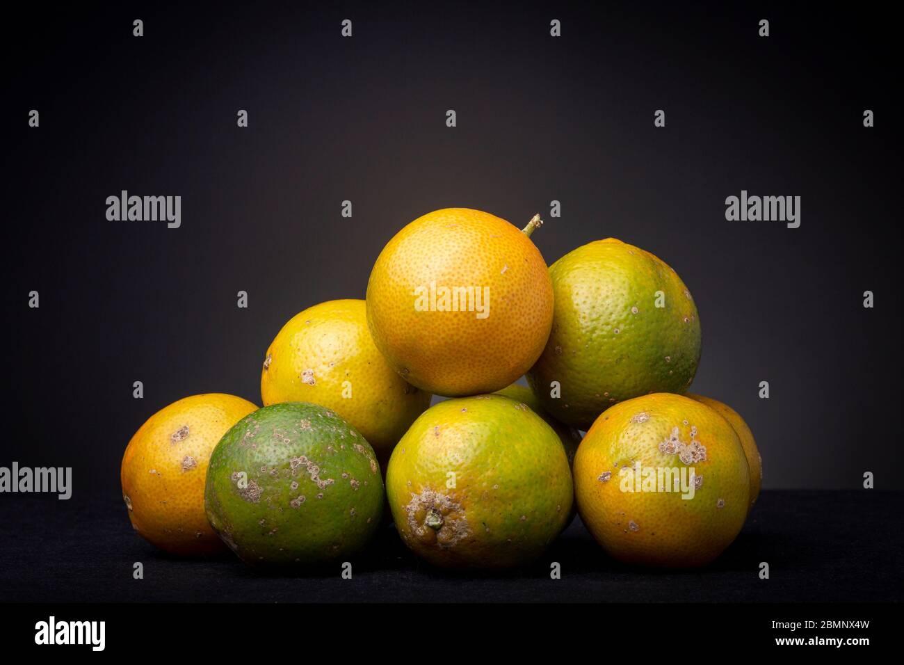 Bouquet de fruits colorés frais mûrs orange et vert Citrus Tangerina. Banque D'Images