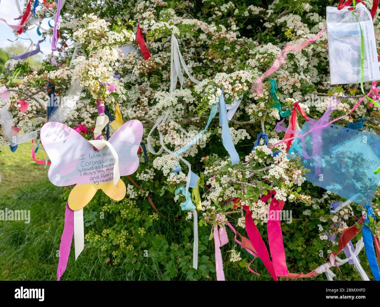 Wish Tree hawthorn couvert en mai fleurir rubans colorés et souhaits sur les Downs à Bristol pendant le Corinavirus pndemic de 2020 Banque D'Images