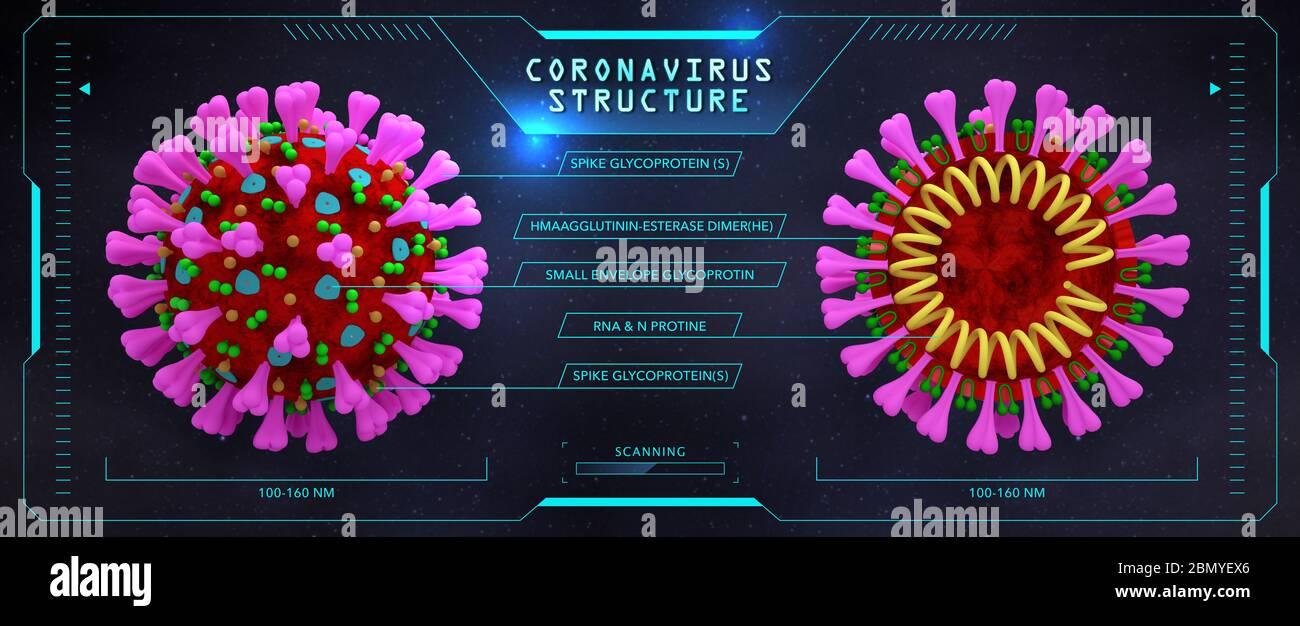 Structure du coronavirus (coupe transversale). Rendu 3D à l'intérieur et à l'extérieur. Nouvelle modélisation 3D de la vue microscopique du coronavirus(2019-nCoV). Banque D'Images