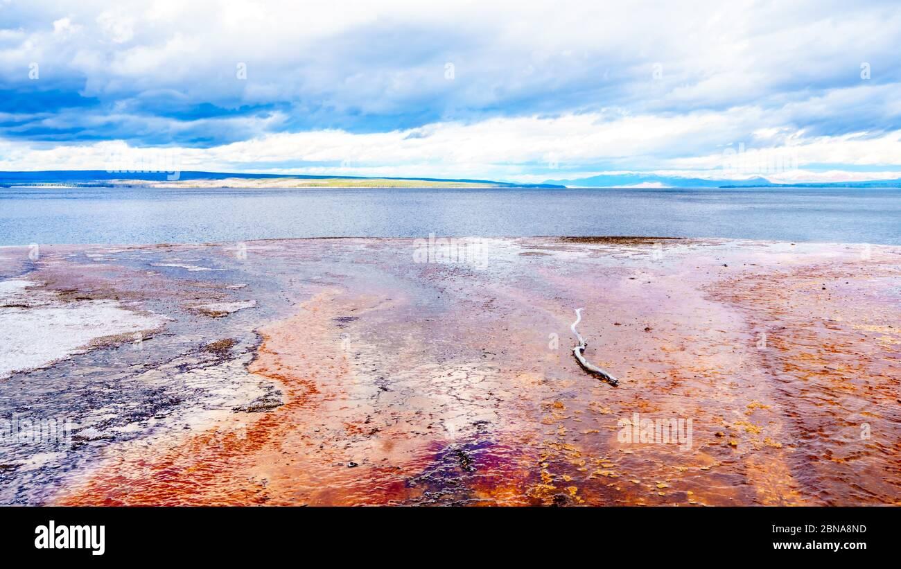 Le tapis bactérien rouge créé par Geyser Water qui coule du geyser Black Pool dans le lac Yellowstone, dans le bassin West Thumb Geyser, aux États-Unis Banque D'Images