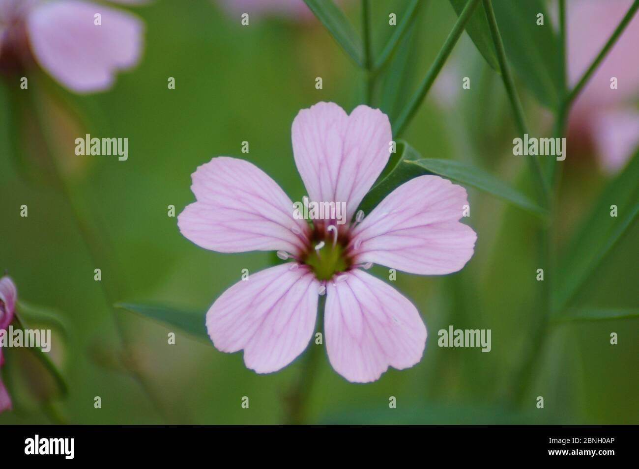 Blüte Banque D'Images