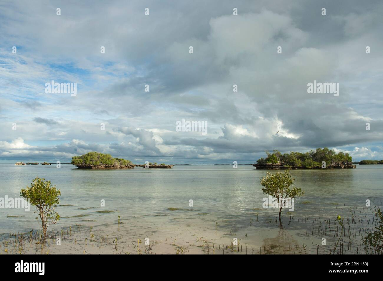 Le lagon d'Aldabra avec «champignons de corail et des mangroves à marée basse, Site du patrimoine mondial naturel d'Aldabra, 2006 Banque D'Images