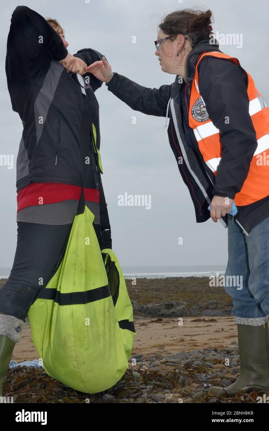 Médecins animaux de sauvetage en milieu marin Rachel Shorland et Michelle Clement pesant le pup de phoque gris blessé (Halichoerus grypus) 'Jenga' en ba Banque D'Images