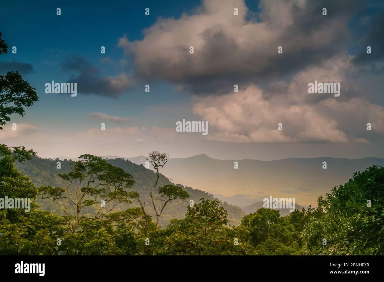 Lumière du soir dans la forêt tropicale luxuriante de Cerro Pirre, parc national de Darien, province de Darien, République du Panama Banque D'Images