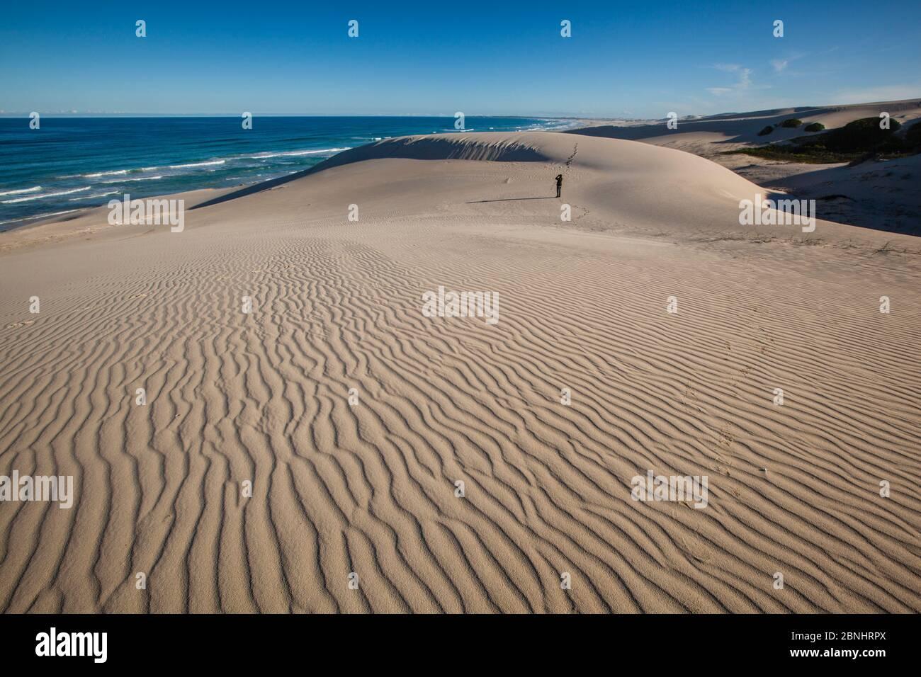 Dunes de sable à la réserve naturelle de Hoop, Western Cape, Overberg, Afrique du Sud. Juin 2013. Banque D'Images