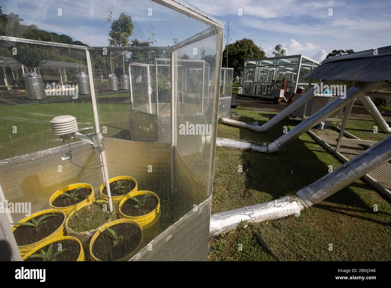 L'hiver les expériences de laboratoire l'étude des fondements physiologiques de chimiques de plantes tropicales comment interagir avec l'environnement et répondre à Banque D'Images