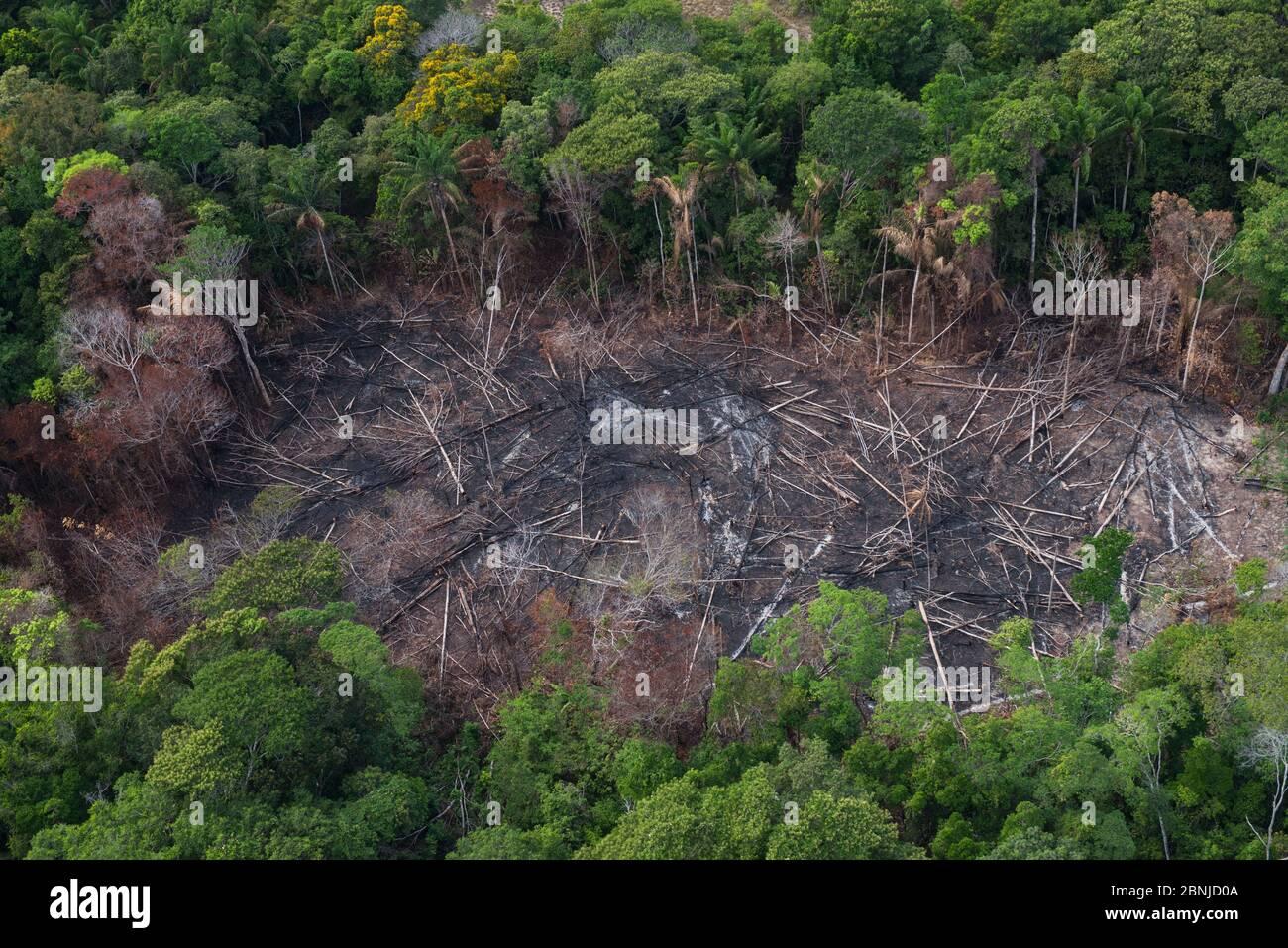 Les brûlis de forêt tropicale pour faire place à l'agriculture, de l'Amérindien Rurununi savane, Guyana, en Amérique du Sud Banque D'Images