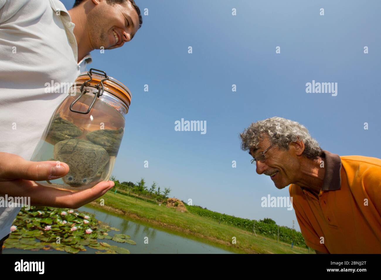Grenouille à tête clavetée africaine (Xenopus laevis) introduite accidentellement en France; hommes regardant un spécimen de grenouille capturée, dans le cadre du plan d'action pour combattre cette alie Banque D'Images