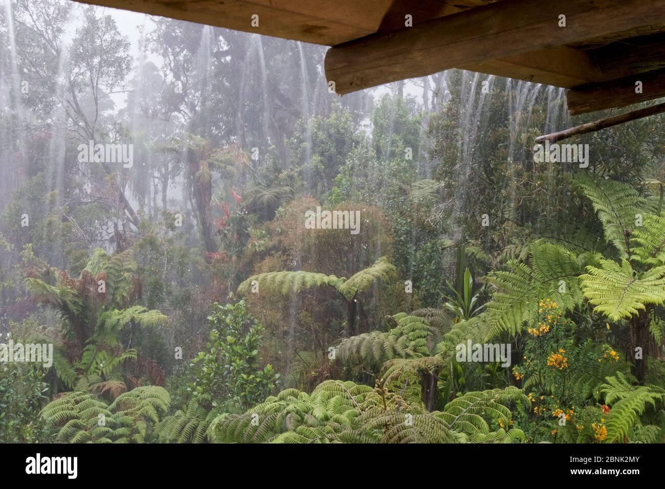 Pluie tombant du toit de la cabine. Kumul Lodge. Papouasie-Nouvelle-Guinée, septembre 2004. Banque D'Images