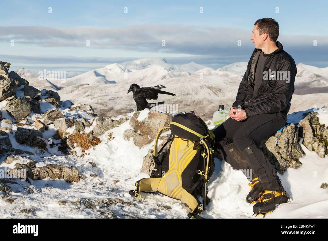 Hill Walker déjeuner au sommet de cairn à Glen COE avec Raven à proximité à la recherche de nourriture des restes. Écosse, Royaume-Uni. Novembre 2015. Banque D'Images