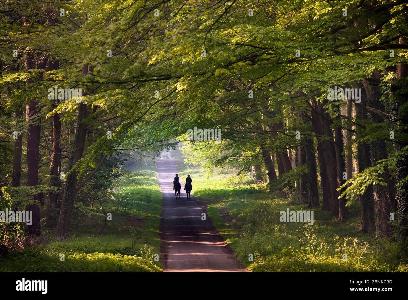 Cavaliers sur la voie de campagne à travers les bois, Holkham, Norfolk, Angleterre, Royaume-Uni, mai. Banque D'Images