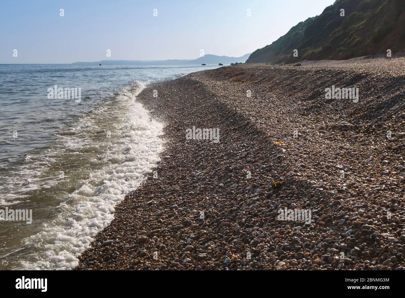 Site de plage de galets à Devon choisi pour la libération de criquets squameux élevés en captivité (Pseudomogoplisttes vicentie). Devon, Royaume-Uni. Juin. Banque D'Images
