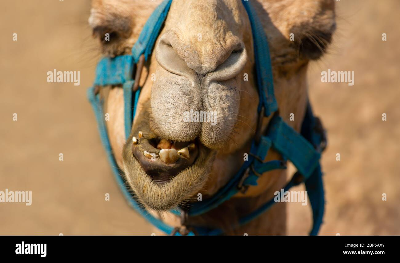 Un Animal Drole D Apparence Est Avec Un Regard Stupide Sur Son Visage Photo Stock Alamy