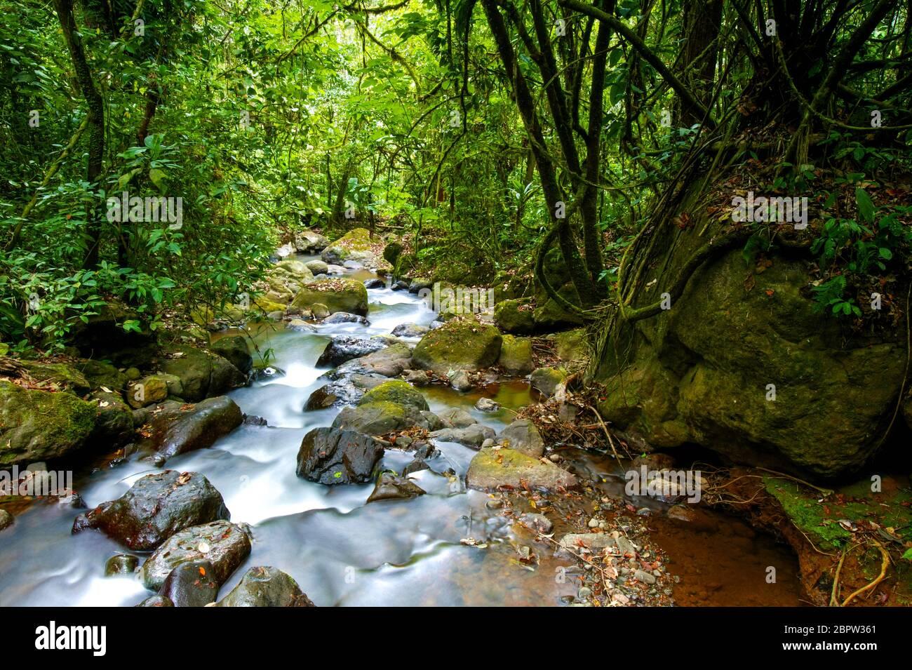 Rivière dans la forêt tropicale luxuriante près de la station de Cana, parc national de Darien, province de Darien, République du Panama Banque D'Images
