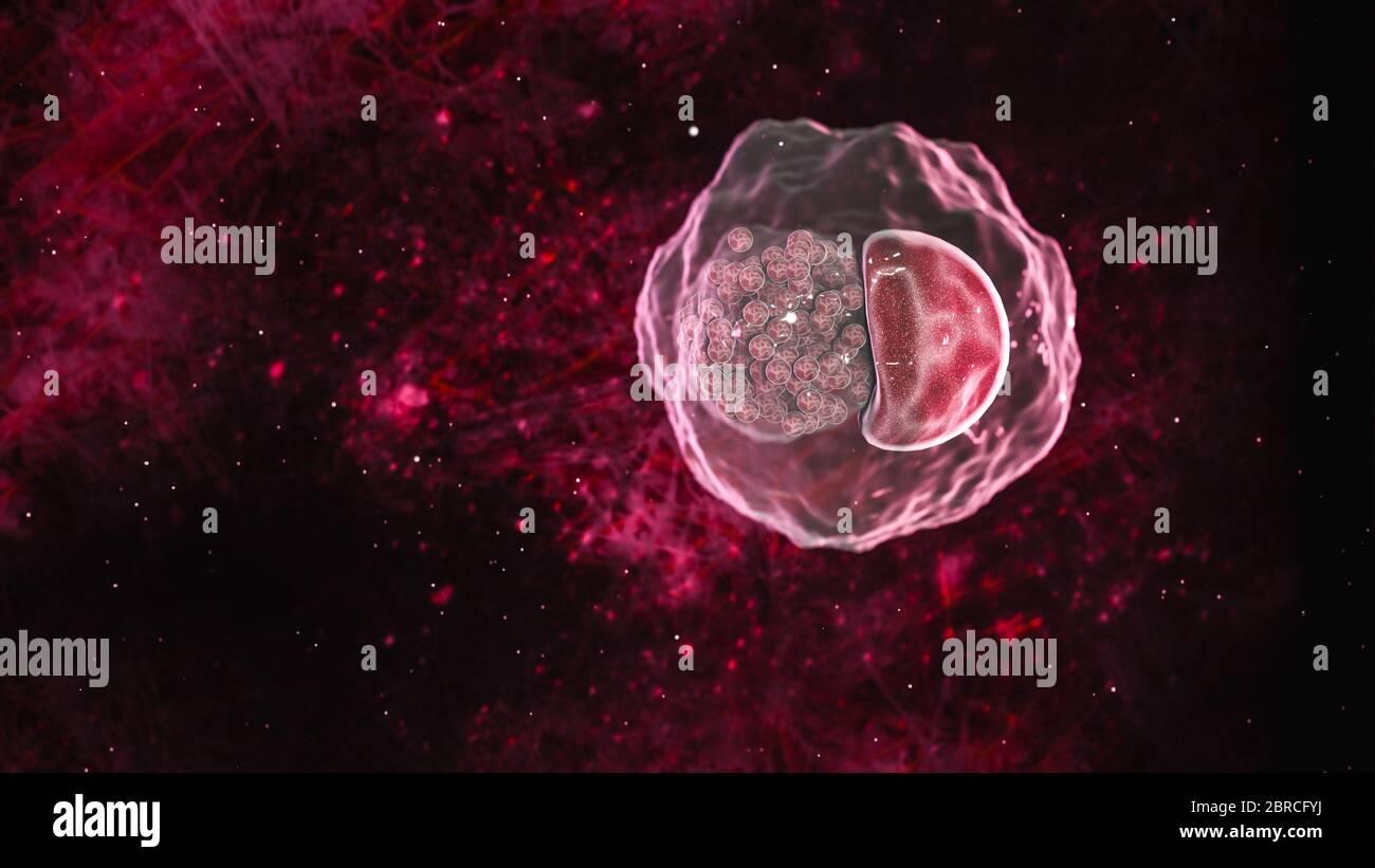 Science photo des bactéries la chlamydia est une maladie sexuellement transmissible courante. Elle est causée par une bactérie appelée Chlamydia trachomatis Banque D'Images