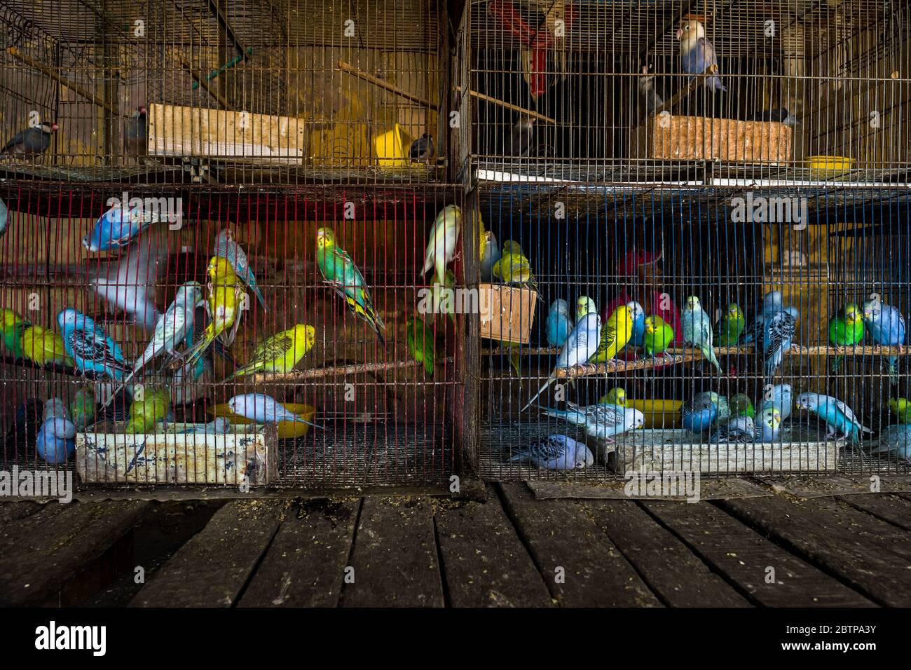 Des dizaines d'oiseaux de compagnie sont vus à l'intérieur des cages à oiseaux dans le marché des oiseaux à Barranquilla, en Colombie. Banque D'Images