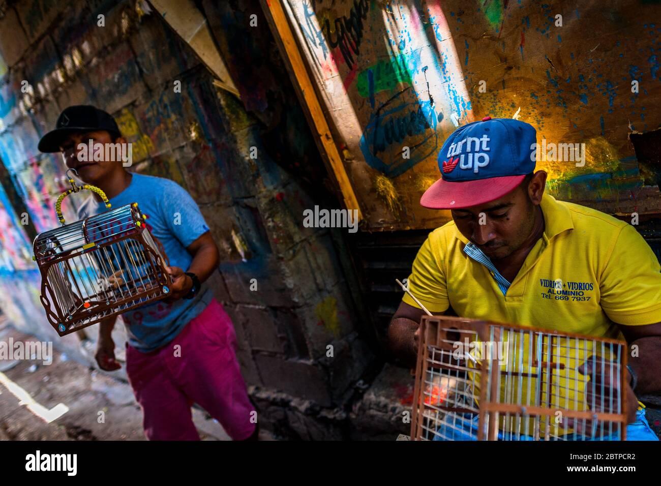 Un constructeur colombien de cages à oiseaux applique du vernis sur la surface en bois d'une cage sur le marché des oiseaux à Cartagena, en Colombie. Banque D'Images