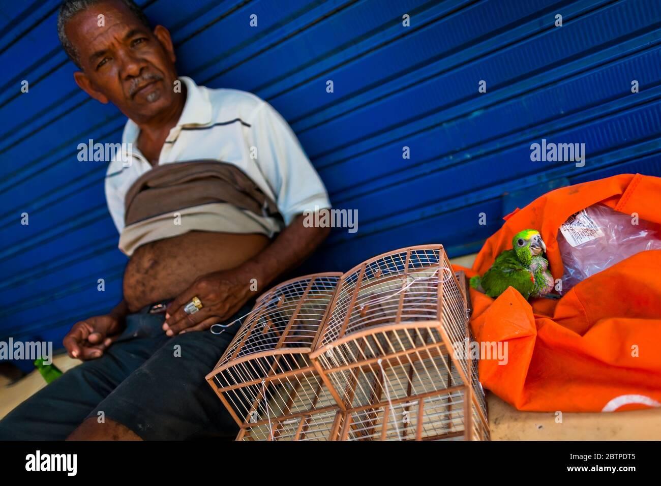 Un vendeur d'oiseaux colombien propose un perroquet amazonien en vente sur le marché des oiseaux de Carthagène, en Colombie. Banque D'Images