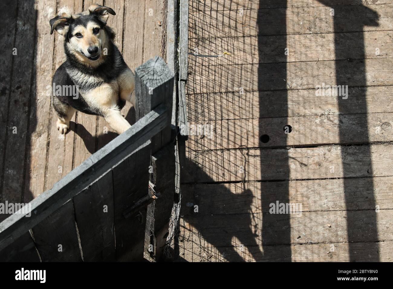 Moscou, Russie. 28 mai 2020. Un chien au refuge pour animaux de bienfaisance d'Alma. Crédit : Vladimir Gerdo/TASS/Alay Live News Banque D'Images
