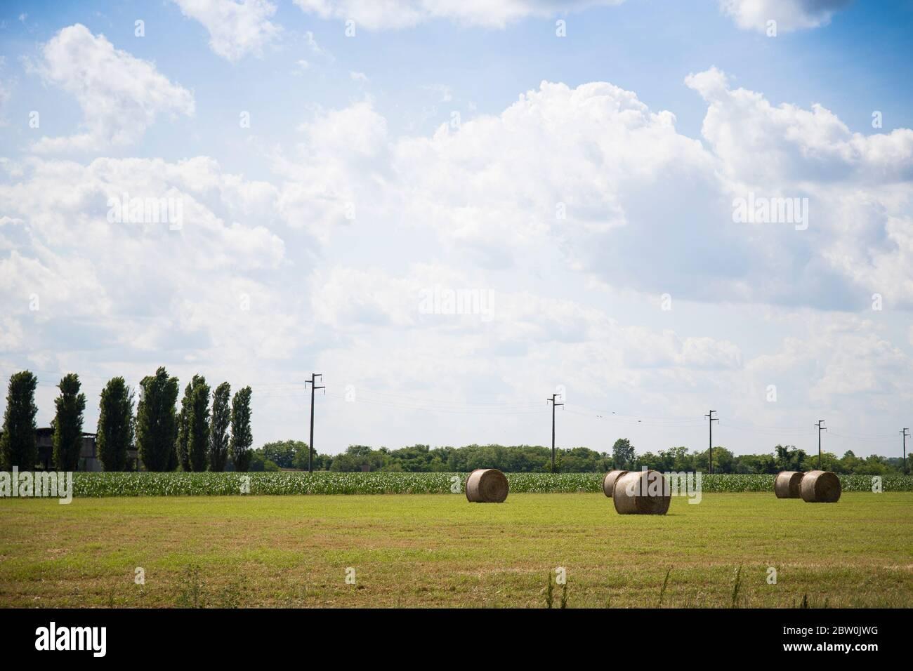 Vue panoramique du paysage agricole et rural typique du nord de l'Italie, avec un ciel bleu, des balles rondes, des arbres et des câbles suspendus. Banque D'Images