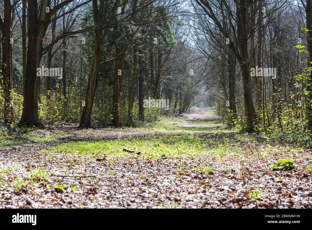 Forêt de friston près de Seaford, East Sussex, Angleterre, vue sur les arbres au printemps, près de la rivière Cuckmere, point sélectif Banque D'Images