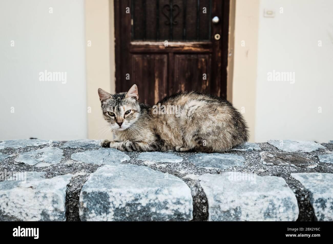 Chat sauvage couché sur un mur en Crète, Grèce Banque D'Images