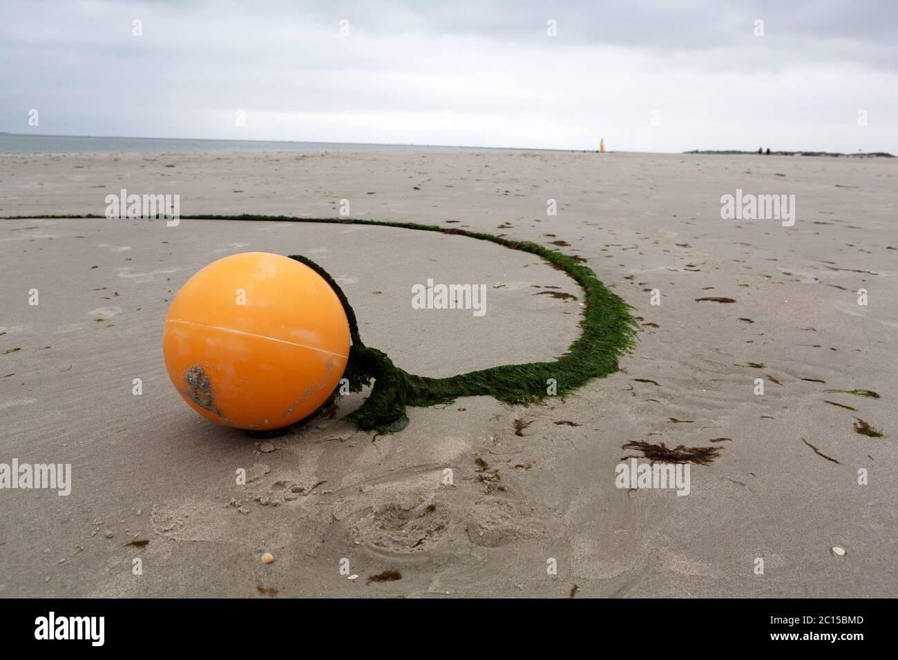 Bouée ronde orange sur la plage de sable en basse saison. Grande couche d'algues vertes couvrant la corde. Bord de mer au printemps. Banque D'Images
