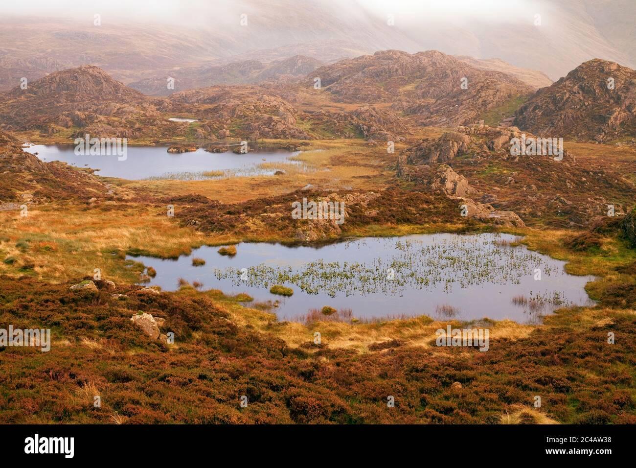 Les tarnes se trouvent sur le plateau de Haystacks, dans le district des lacs anglais Banque D'Images