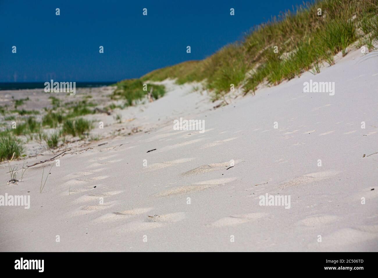 Mer Baltique, Allemagne, Mecklembourg-Poméranie occidentale, Darß, Prerow, bord de mer Banque D'Images