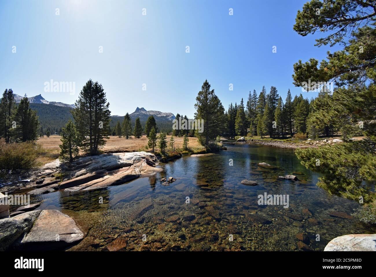 Rivière Tuolumne passant par les prairies subalpines de Tuolumne, avec des arbres et des montagnes en arrière-plan dans le parc national de Yosemite, Californie Banque D'Images