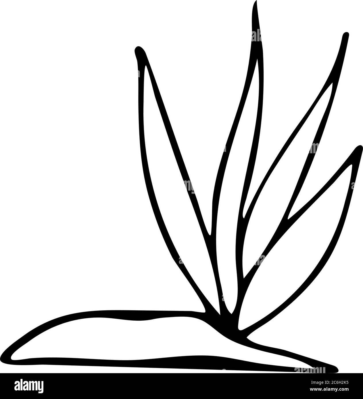 Croquis d'algue noir et blanc. Illustration vectorielle pour livre ...