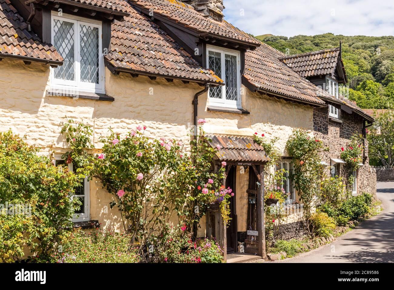 Roses fleuries à l'extérieur de cottages carrelés traditionnels dans le parc national d'Exmoor, dans le village de Bossington, Somerset, Royaume-Uni Banque D'Images