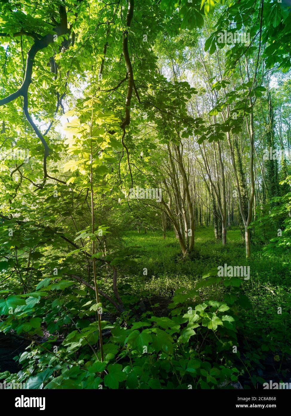 Paysage dans les bois de Surrey Banque D'Images