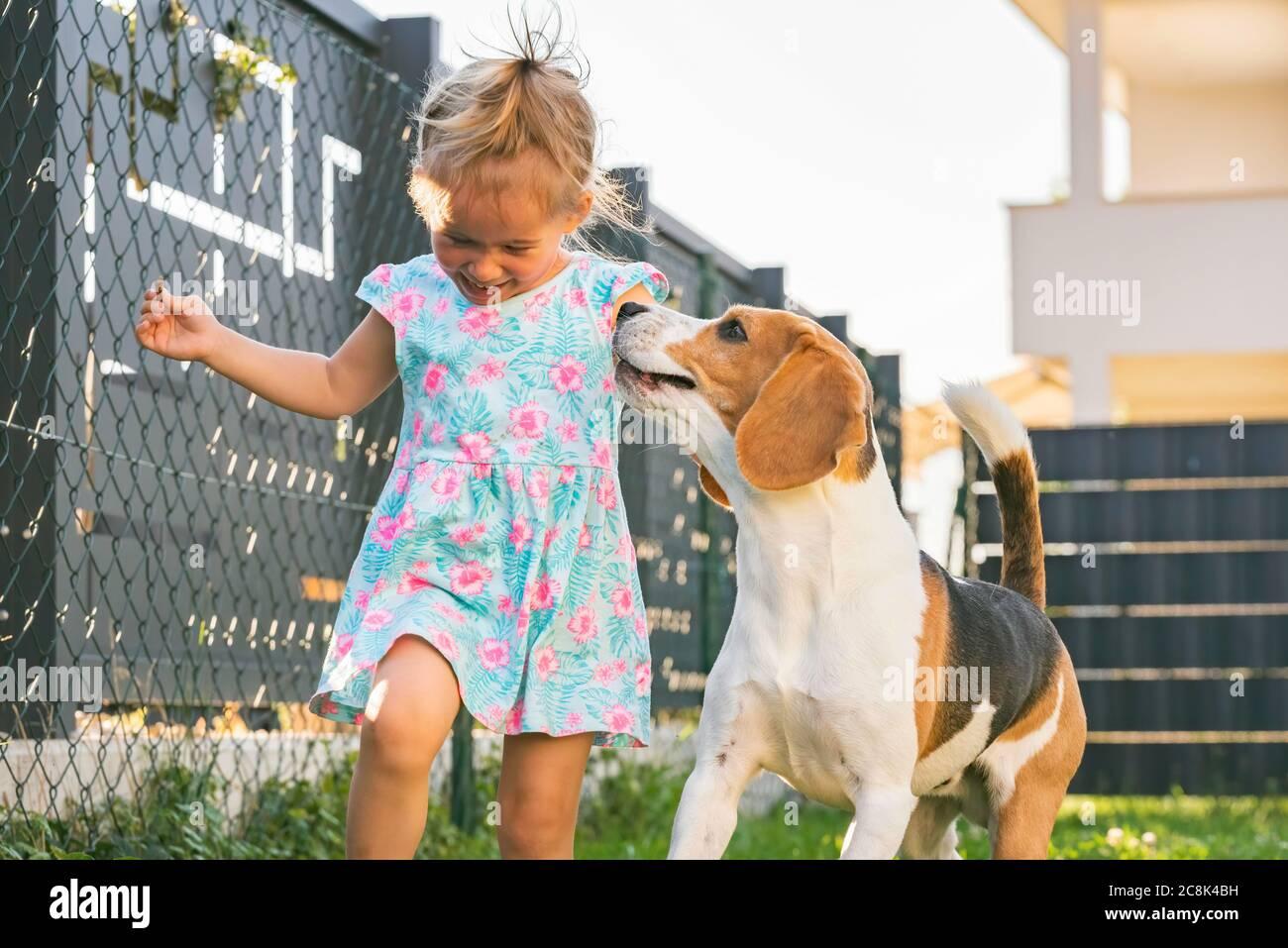 Petite fille qui court avec un chien de beagle dans la cour en été. Concept animal domestique avec enfants. Banque D'Images