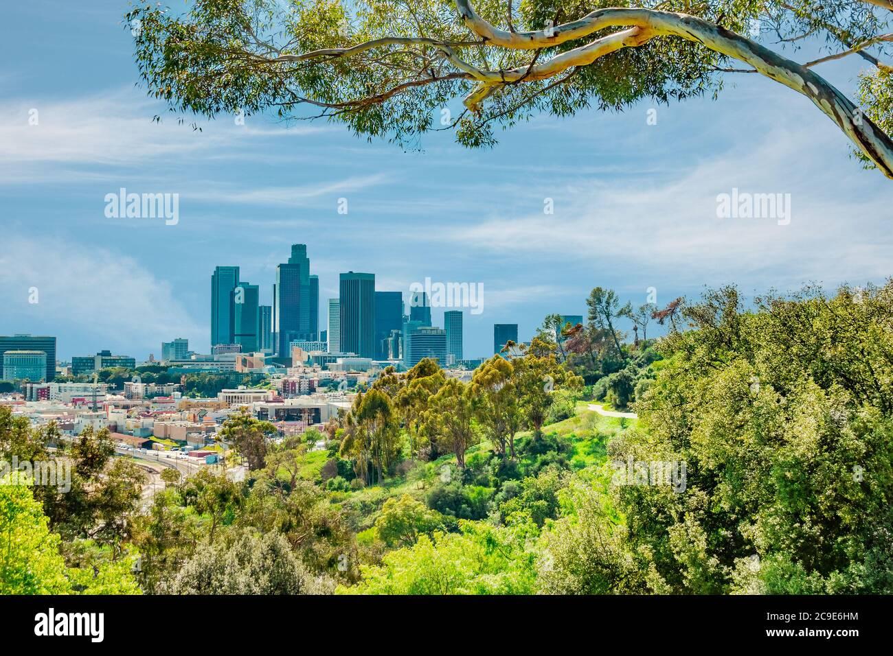 Une vue pleine d'arbres au sommet d'une colline sur les gratte-ciel de Los Angeles montre des gratte-ciel, et plusieurs types d'entreprises. Les collines et les arbres font partie de l'immense E Banque D'Images