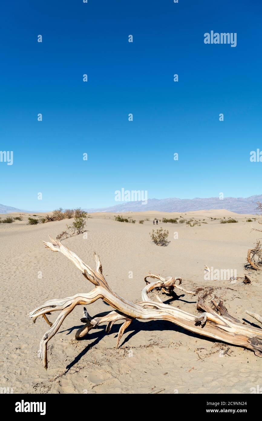 Télévision Mesquite Sand Dunes, Death Valley National Park, California, USA Banque D'Images