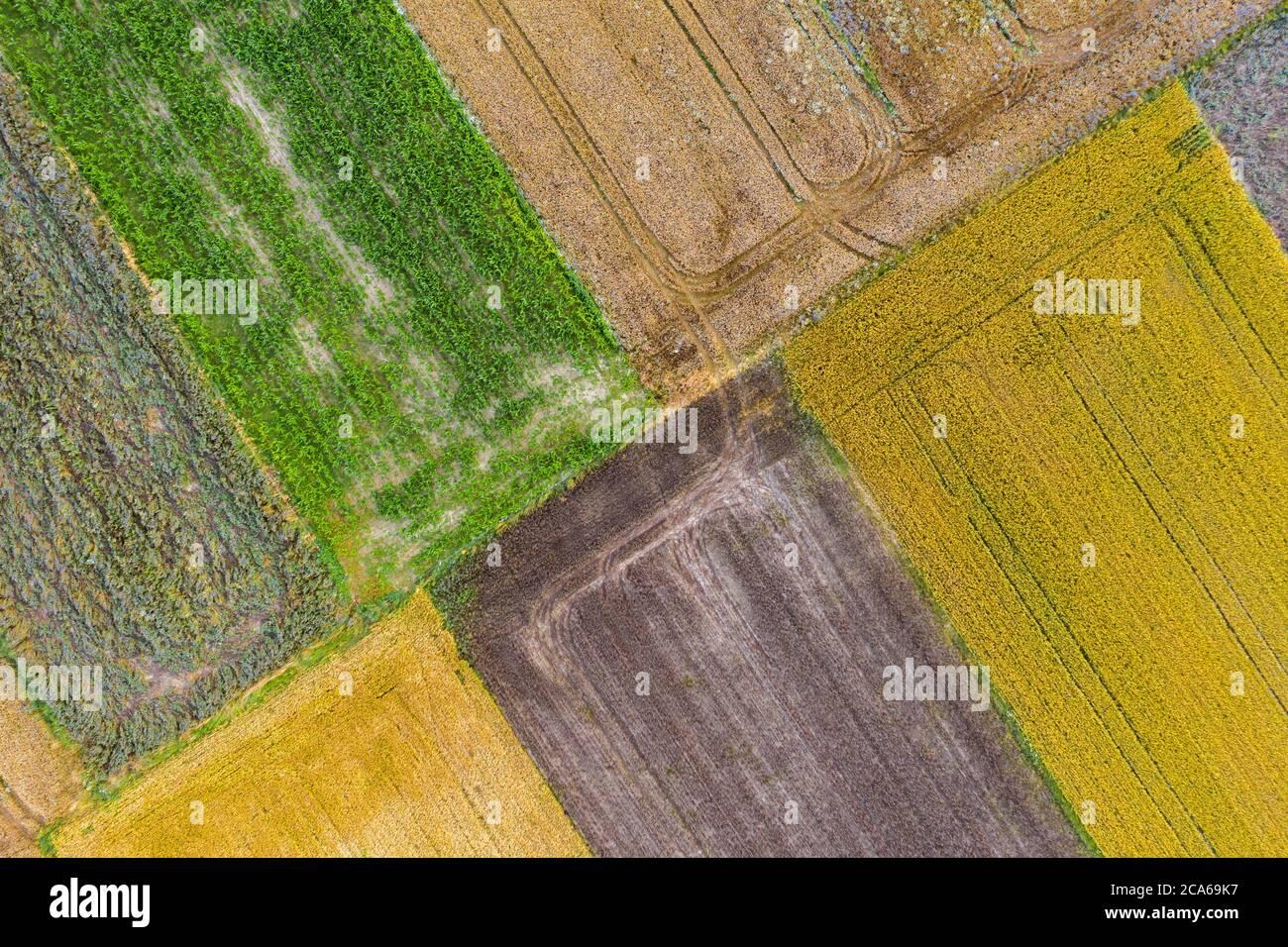 Vue aérienne par drone des champs de culture avec le maïs, le canola, le blé et le seigle Banque D'Images