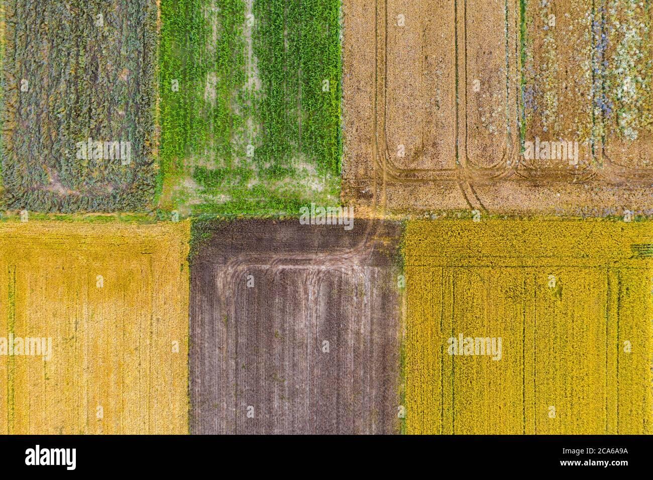 Vue aérienne par drone des champs de culture avec du maïs vert, du canola jaune, du blé brun et du seigle Banque D'Images