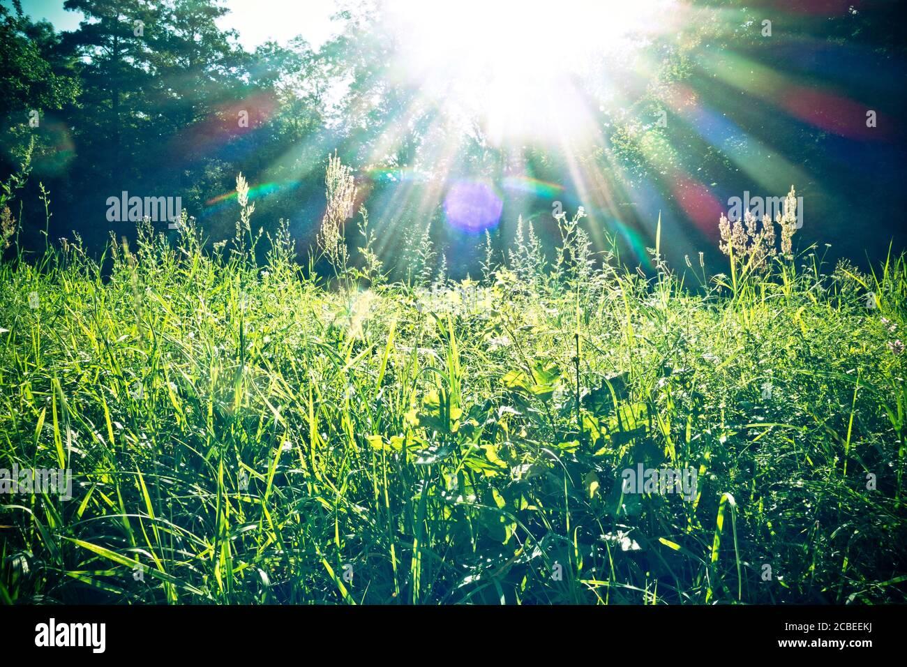 herbe avec lumière du soleil de l'arrière Banque D'Images