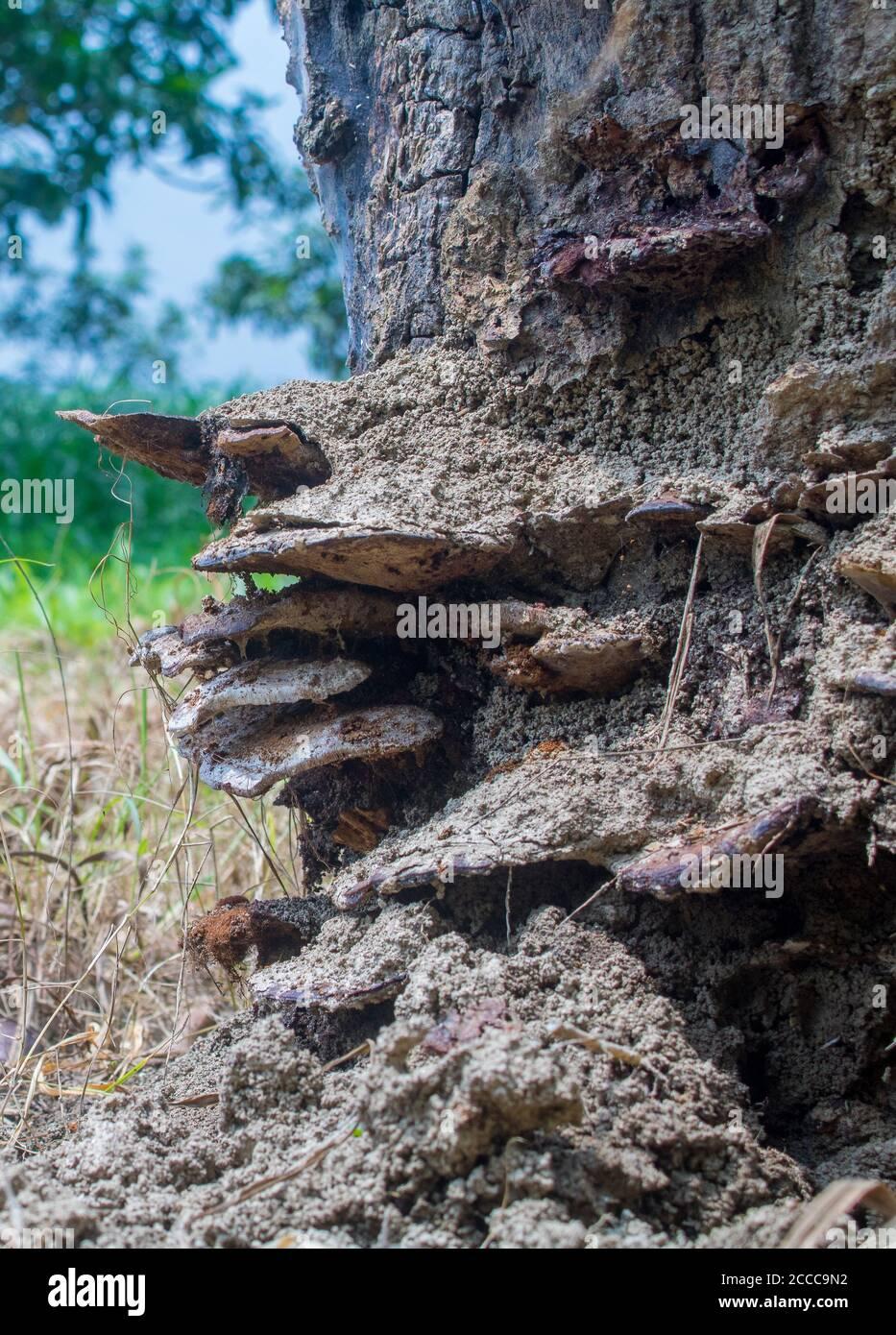 Une vieille souche d'arbre recouverte de mousse et de champignon. Vu que la lumière du soleil brille à travers les feuilles de la forêt épaisse. Banque D'Images
