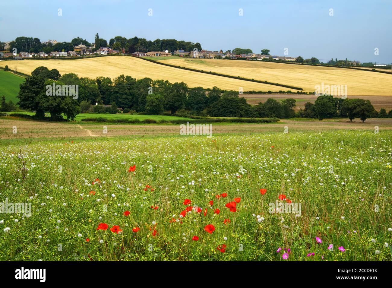 Royaume-Uni, West Yorkshire, campagne autour du village de Flockton Banque D'Images