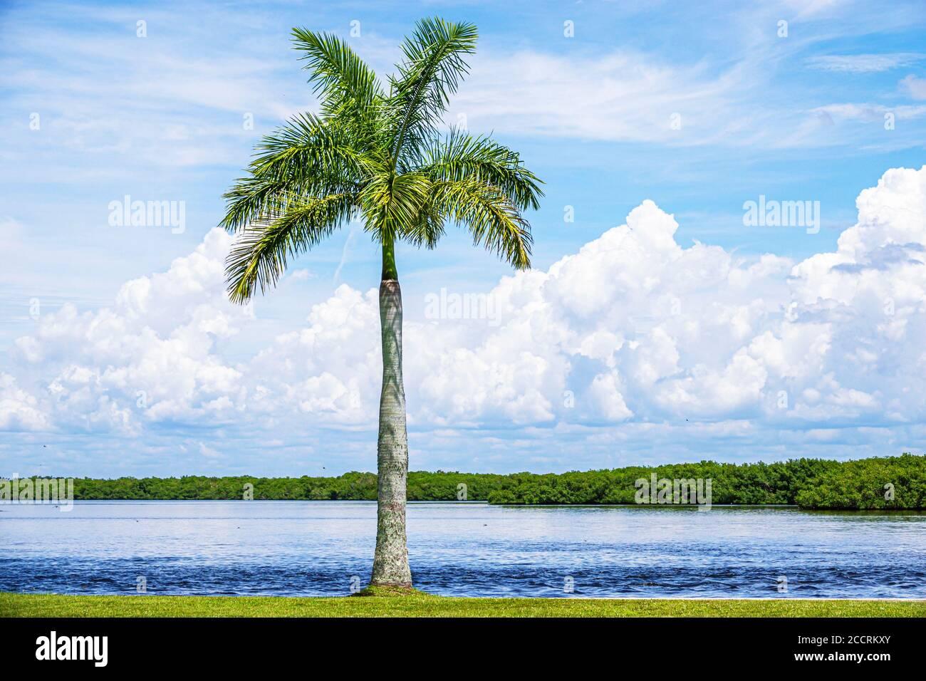 Floride Matlacha Isles Shores Matlacha Pass Aquatic Preserve mangrove Island eau de palmier au bord de l'eau Banque D'Images