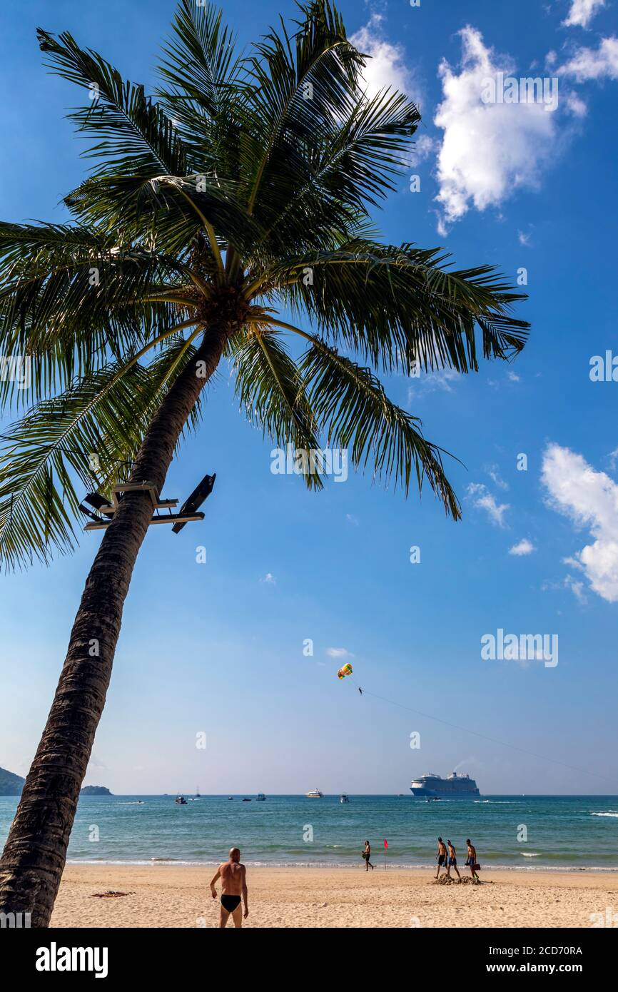 Palmier sur Patong Beach, Phuket, Thaïlande Banque D'Images