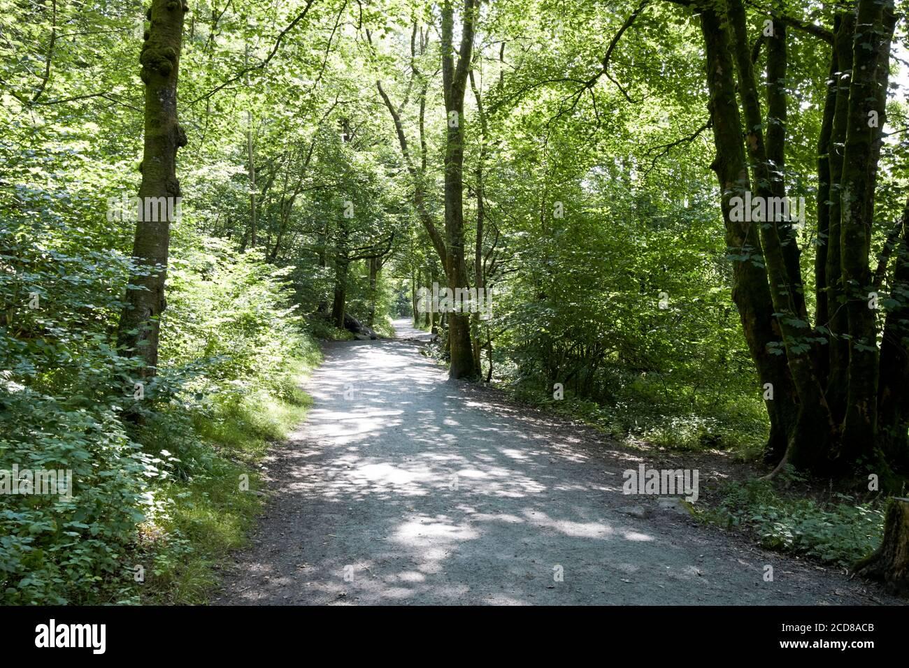 chemin d'accès public à travers les bois dans le district de lac d'eau d'angleterre royaume-uni Banque D'Images