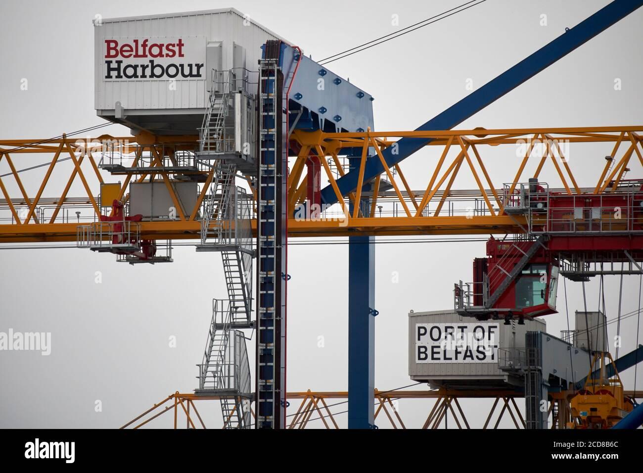 grues dans le port de belfast nord irlande royaume-uni Banque D'Images