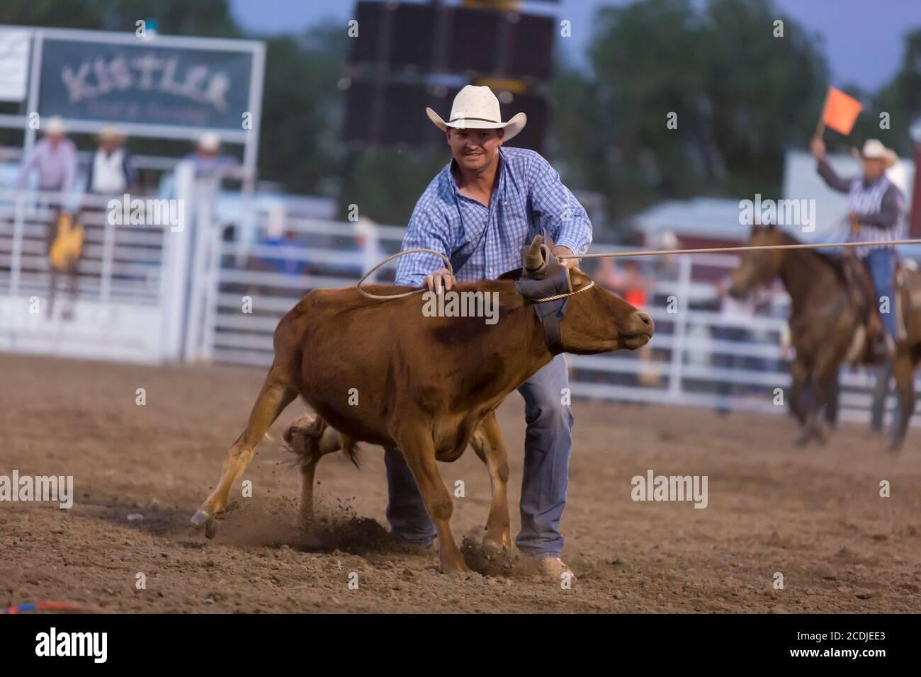 Un cowboy s'éloigne lors de l'épreuve de roping au PRCA Rodeo à la Wyoming State Fair à Douglas le jeudi 13 août 2020. La 108e foire annuelle a ouvert cette semaine avec des précautions supplémentaires pour prévenir la propagation du virus COVID-19. Banque D'Images
