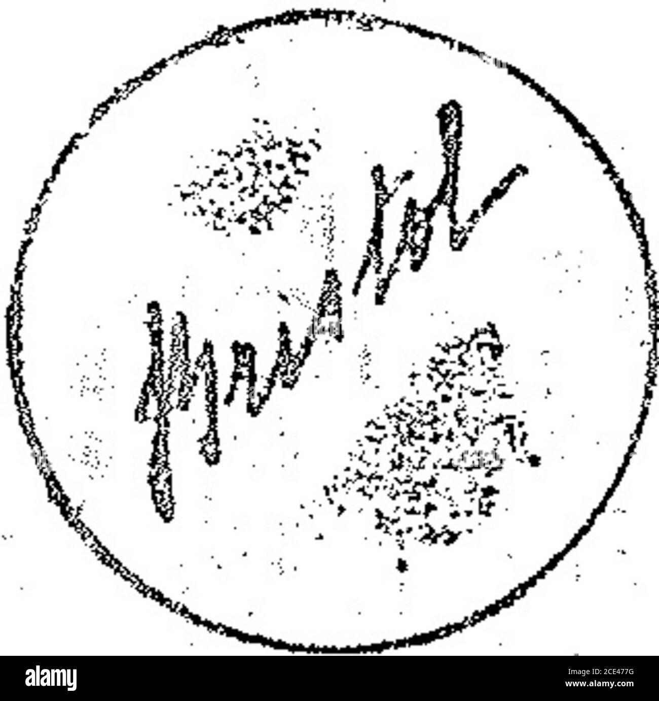 . Boletín Oficial de la República Argentina. 1919 1ra sección . s^* m 8» i OÍA ??;.•? A; r- lí n #& f^nun SU m !l tíhñññññkMñ p) ffínrñh^ _$í0L>,f le 101A — Miealáás as y aparatos para Koeb ?tía c. «•as ciases pírricf de las mis mas. acci, filtrat. Máquinas, aparatos o tmpícmapicultura, piscicultura, lechería vitivinide laclase 5~. Avho N° 8430. ACTA K° 70501 altor VCAIpmann. —- Para dis-- de industrias, no comprendidas::so;ios y complementos paraen tas de agritura, avien] tu-mlínra y seligortura, ípnc-JA2L octubre v-25 octubre ?*%?; Oetubrrt-iculos til; 15. Ta vertía. ~ Para -disSirign Banque D'Images